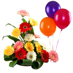 Passionate Bouquet of Mixed Gerberas and Balloons
