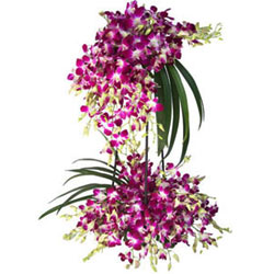 Lovely Days 30 Orchid Stems Tall Bouquet