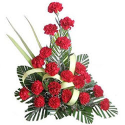 Tender Best Wishes Red Carnation Flowers Collection
