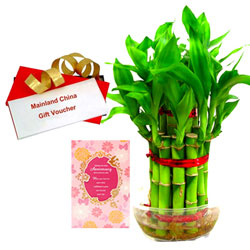 Attractive Combo of Bamboo Plant, Anniversary Card with Gift Voucher