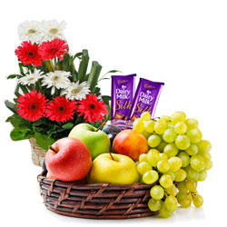 Exquisite Combo of Dairy Milk Silk with Gerberas Arrangement and Seasonal Fruits Basket