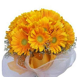 Dreamy Sunshine Bundle of�Yellow Gerberas