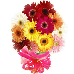 Delightful Collection of 15 Mixed Gerberas