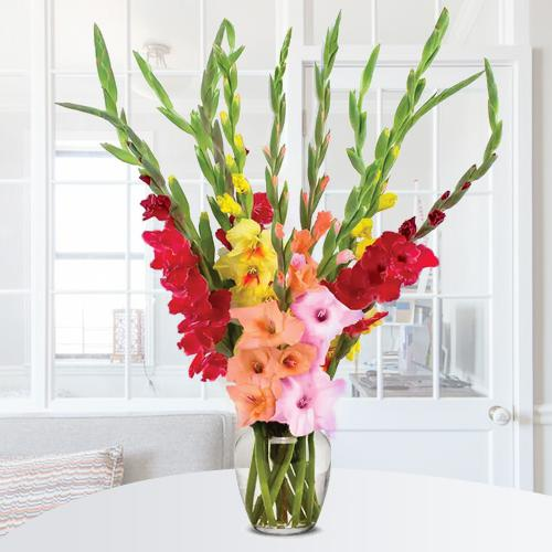 Breathtaking Mixed Color Gladiolus in Glass Vase