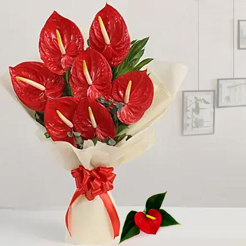 Beautiful Bouquet of Red Anthodium with Tissue Wrap