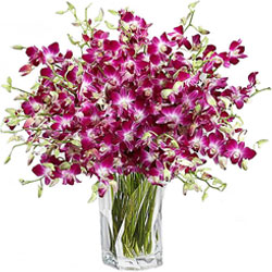 Graceful Purple Orchids in Glass Vase