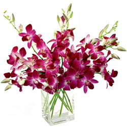 Charming Purple Orchids in Glass Vase
