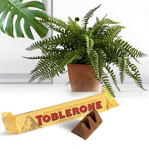 Blooming Bostern Fern House Plant N Chocolate Combo