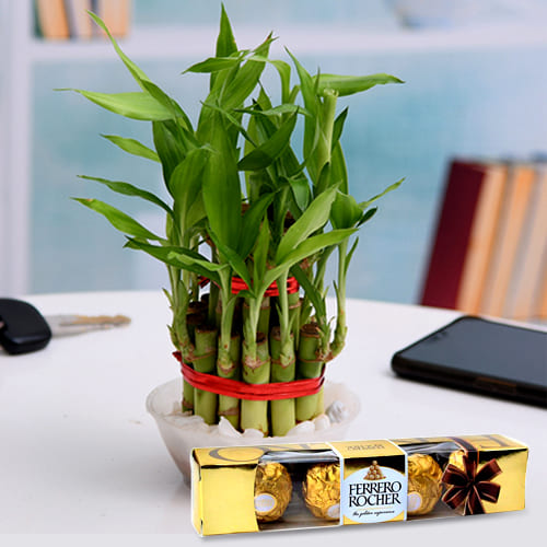 Vibrant Two Tier Lucky Bamboo Plant with Ferrero Rocher Chocolates Pack