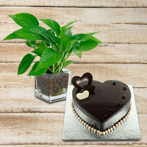 Good Luck Money Plant in Glass Pot with Tasty Chocolate Heart Shape Cake<br>