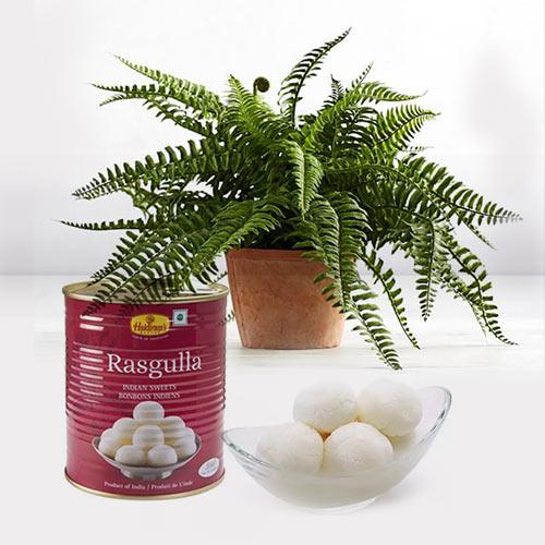Fascinating Air Purifier Live Plant N Rasgulla Combo